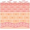 皮脂膜とセラミドの役割とは?アトピー肌になるのはバリア機能が弱いから