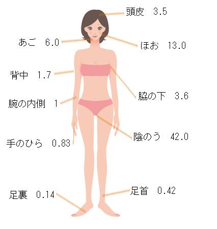 ステロイド経皮吸収率.jpg